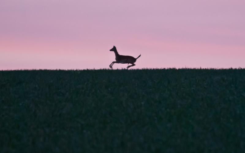 Ночная навигация Пока ночи еще достаточно длинные, вы можете попробовать совершить ночной переход для усовершенствования своих навыков ориентирования в темноте. Вам придется больше полагаться на карту и компас, но в темноте вы можете увидеть то, что никогда бы не встретили в светлое время суток. Например, зверей и птиц, ведущих ночной образ жизни. Кроме того, вам потом станет гораздо легче ориентироваться в плохих погодных условиях, таких как туман.