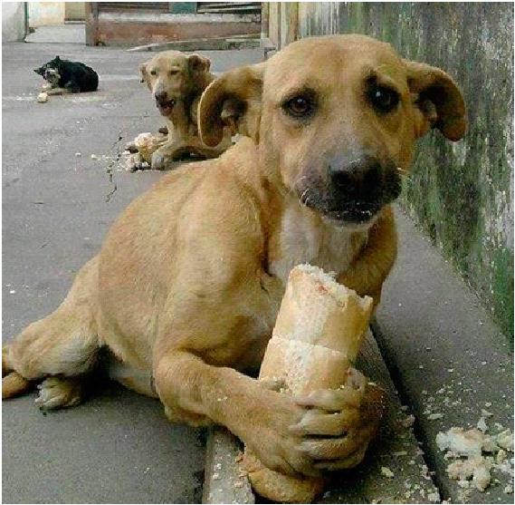 Откупиться Другой вариант – подкормить псов, если с собой есть еда, конечно. Без резких движений кинуть кусок пищи, желательно чуть в сторону от места столкновения. Подождите, пока собаки не обратят внимание на предложенное, а потом не торопясь и по-прежнему не поворачиваясь к ним спиной, покиньте место действия.