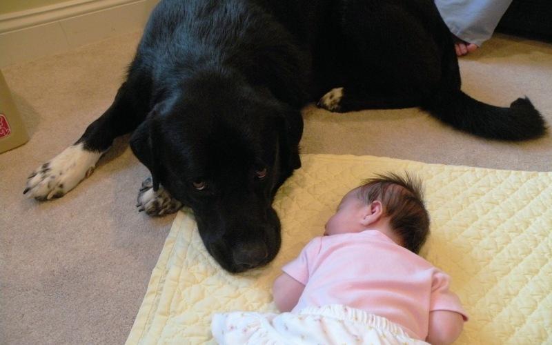 Им не место рядом с детьми Любая прошедшая хорошую подготовку и социализированная собака может стать лучшим другом для ребенка. Большинству из них нравится быть частью семьи, и они способны понимать разницу между детьми и взрослыми. Если вы к тому же будете пресекать попытки вашего ребенка прокатиться на собаке, как на лошади, или засунуть посторонние предметы ей в ухо – все точно будет окей!