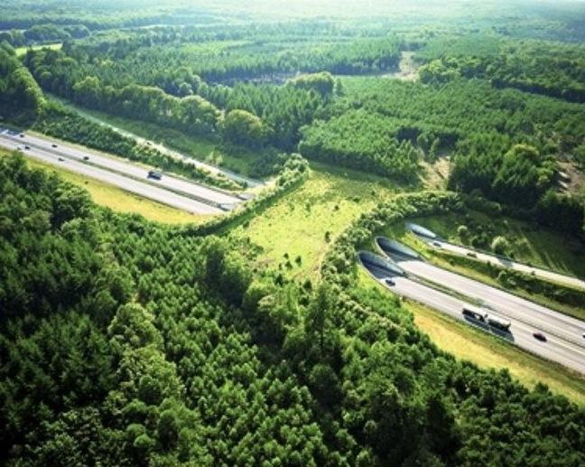 Автострада А50, Нидерланды