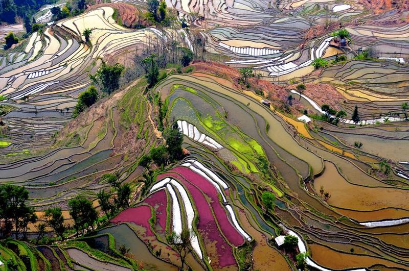 Посмотреть с самой высокой точки на рисовые террасы провинции Юньнань, Китай.