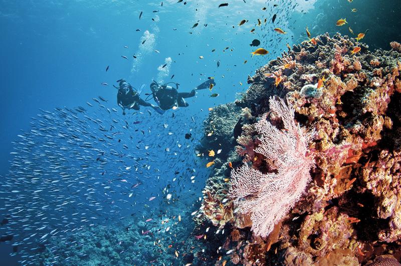 Нырнуть в мекке дайвингистов со всего мира — Большом Барьерном рифе.