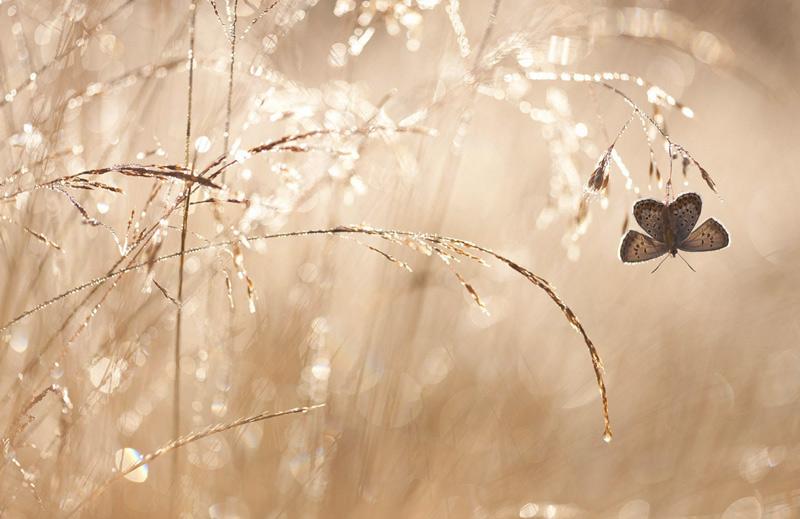 Йоханнес Клапвиджик. Победитель в категории «Маленький мир». Бабочка в лучах утреннего солнца.