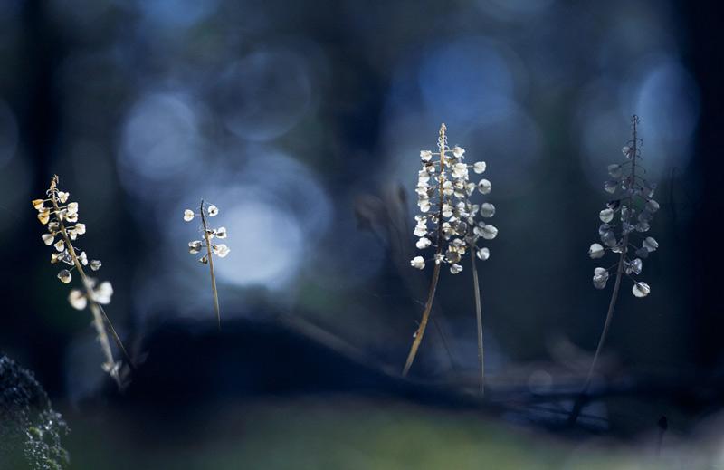 Яннис Гогос. Вторая премия номинации «Маленький мир». Цветы в лесу, в северо-восточной части Греции.