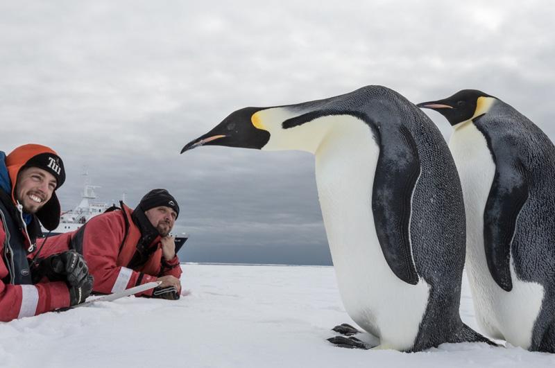 Отправиться в круиз по Антарктиде.