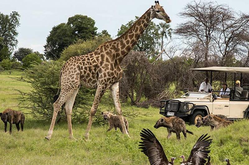Познакомиться ближе с дикой природой, поехав в сафари-тур по Ботсване.