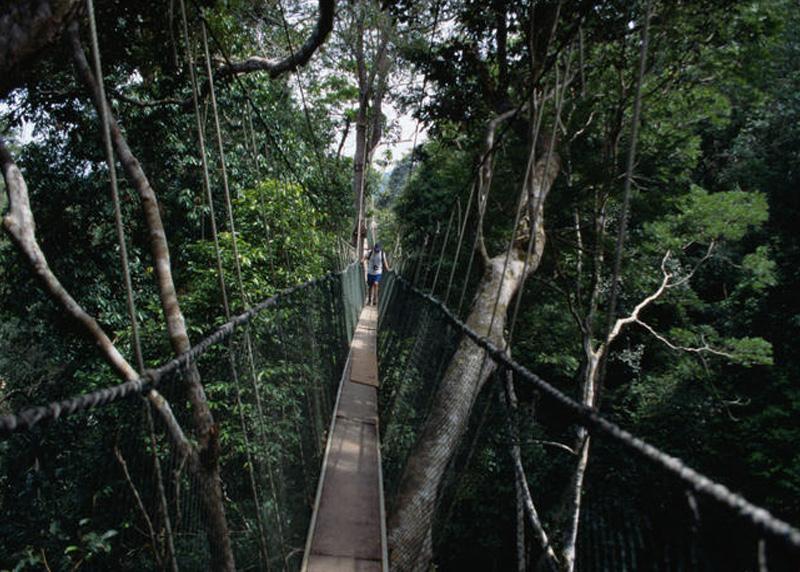 Таман Негара, Малайзия Среди тропических лесов Малайзии раскинулся национальный парк Таман Негара. Один из маршрутов парка проходит по подвесному мосту длиной 510 метров. Узкая дорожка из веревок и досок располагается на высоте более 45 метров от земли, прямо у вершин деревьев.