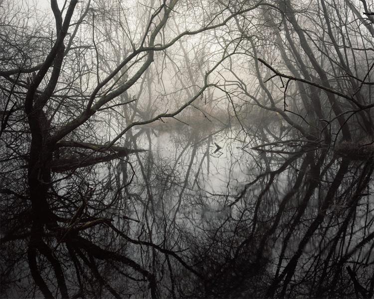 Джо Райт. Вторая премия номинации «У самого края воды». Лес в Великобритании во время затяжного периода сильных дождей.