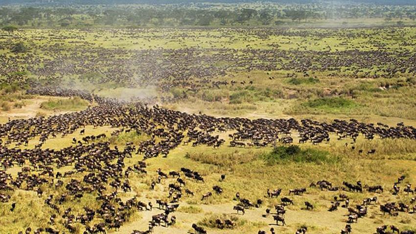 Серенгети, Танзания Национальный парк площадью 14 763 кв.км., расположенный в Танзании, является домом для 500 видов птиц и 3 млн. особей крупных животных. Одной из знаковых особенностей парка является миграция животных. В засушливый период октября и ноября миллионы животных устремляются с северных холмов на южные равнины, а в апреле-июне они мигрируют на запад и север. Великая миграция — потрясающее зрелище, оценить все масштабы которого в полной мере можно только с самолета или воздушного шара.