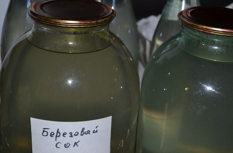 Хранение сока Березовый сок в чистом виде не рекомендуется хранить в холодильнике больше 2-3 суток. Для более длительного хранение сок необходимо законсервировать: добавить сахар, довести сок до кипения, перелить в пастеризованную банку, добавить 1/2 чайной ложки лимонной кислоты и закатать банку металлической крышкой. Хранить консервированный березовый сок следует в темном, прохладном месте.