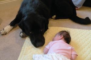 bigdoggydog