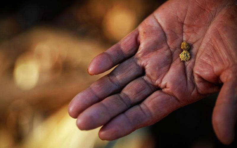 Ручей Алексеевский Золото здесь крупное (самородки весом до 1 кг), хорошо окатанное, часто срастается с кусками кварца. Наиболее крупные самородки встречаются в вершине ручья, под крупными валунами. Бригада из 2-3 человек легко может намыть здесь золота на более чем 300 грамм.