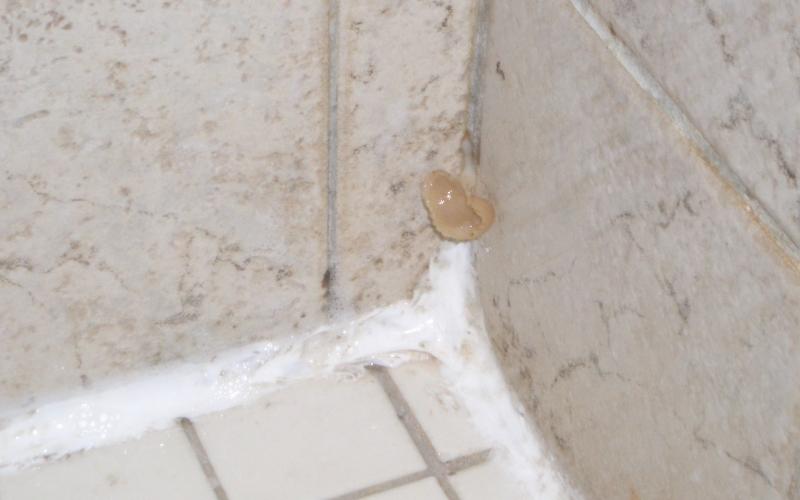 «Позаботьтесь» о плесени в ванне<br /> Во влажной среде ванной комнаты плесень чувствует себя просто прекрасно. Чтобы эффективно бороться с ней, необходимо избавится от причины ее возникновения. Установите вытяжной вентилятор или хотя бы оставляйте во время купания дверь в ванную приоткрытой. Плесень любит селиться в труднодоступных местах, так что не ленитесь хотя бы раз в неделю протирать вокруг ванны и раковины.