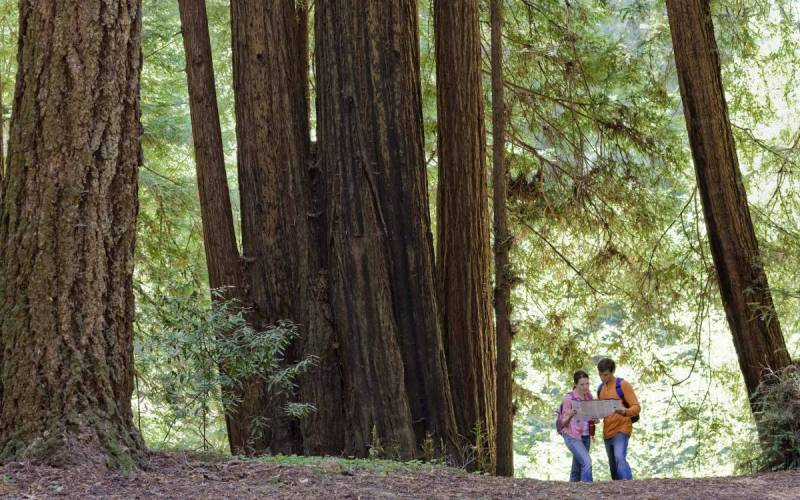 Калифорния В 1958 году Рэй Уоллес, владелец строительной компании в северной Калифорнии, продемонстрировал широкой публике цветной фильм, на котором было видно как бигфут (американское наименованиеснежного человека) пробирается через лесные заросли. Пленка взбудоражила весь мир, но после смерти Уоллеса выяснилось, что кинофильми другие «неопровержимые доказательства» были сфабрикованы им и его семьей. Тем не менее существуют люди, утверждающие, что снежный человек действительно здесь обитает.