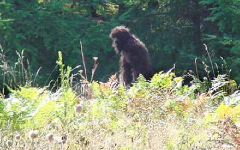 an argument in favor of existence of big foot yeti and sasquatch Wwwcryptomundocom/evidence/scent-of-a-sasquatch/ scent of a sasquatch posted by: dorraine fisher july 16th, 2013 what's that smell all about.