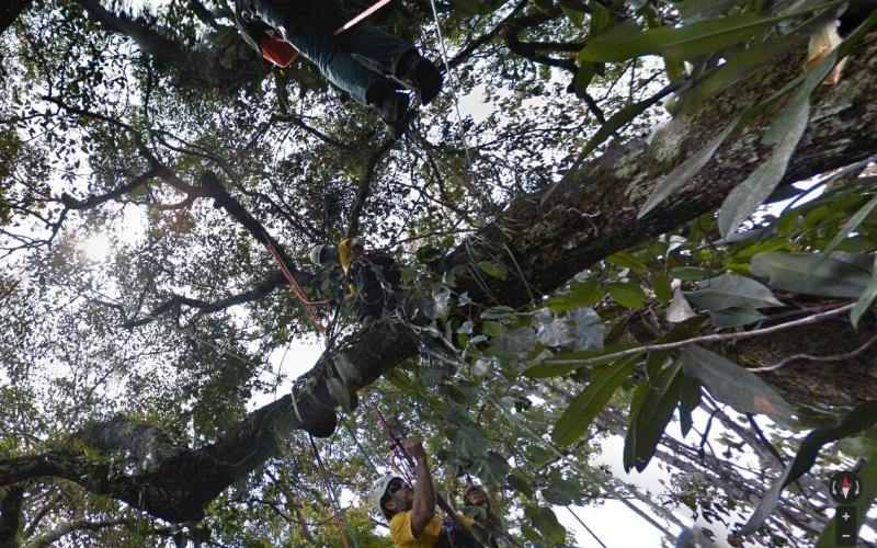 Зиплайн, леса Амазонки Для того, чтобы отснять более 50 тысяч панорамных снимков от верхушек деревьев до самого сердца джунглейв лесах Амазонки, команде из Google Earth и профессиональным зиплайнерам пришлось перевозить свое оборудование на лодке, пока они пешком искали виды, шанс увидеть которые выпадает только раз в жизни.
