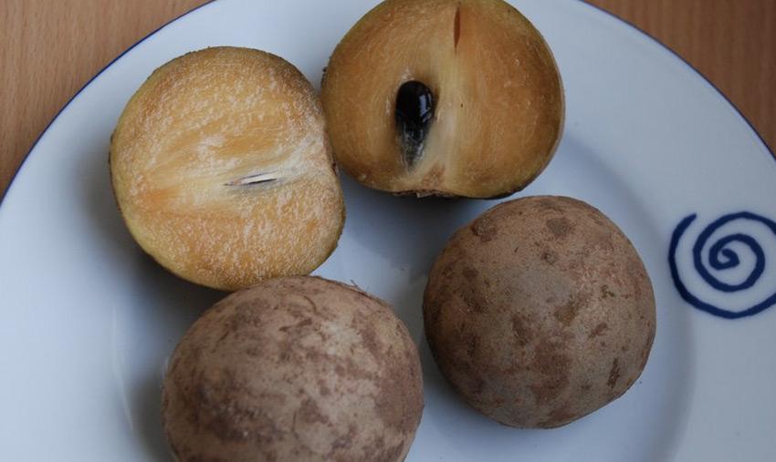 Саподилла      Фрукт по виду напоминает киви, а по структуре — хурму. Спелые плоды обладают сладким вкусом. Их едят в свежем виде, тушат, используют как начинку для пирогов и делают на фрукте вино. Наибольшее распространение фрукт получил в Индии, Индонезии, Малайзии, во Вьетнаме, на Шри-Ланке, Филиппинах и в тропической Америке.