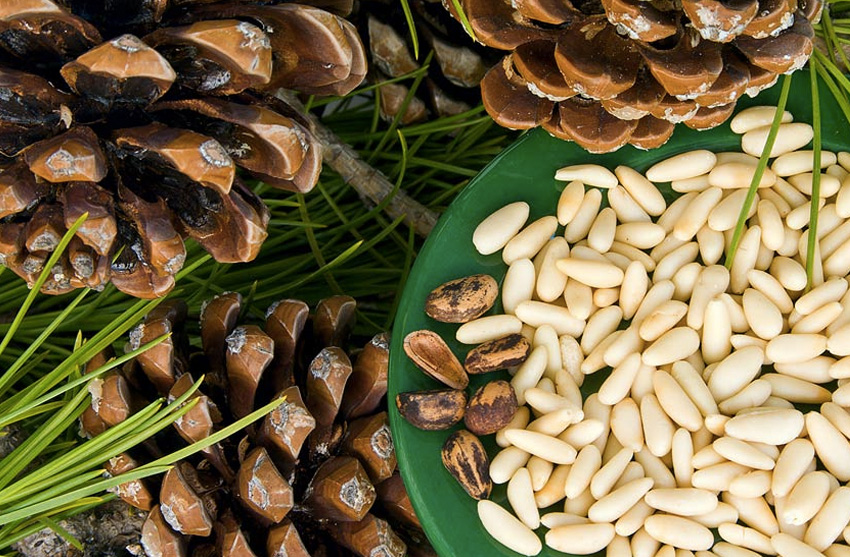 Кедровые орехи Семена кедровой сибирской сосны содержат девятнадцать аминокислот, витамины А, В, С, D, Е, Р, важные макро- и микроэлементы. Концентрация их настолько высока, что всего 100 гр. кедровых семян могут обеспечить суточную потребность в марганце, меди, цинке, калии, кальции, кобальте и многих других элементах. На организм кедровые орехи оказывают общеукрепляющее действие, нормализуют деятельность нервной системы, снижают риск сердечно-сосудистых заболеваний. В скорлупе орехов содержатся дубильные вещества, оказывающие выраженное противовоспалительное и обезболивающее действие.