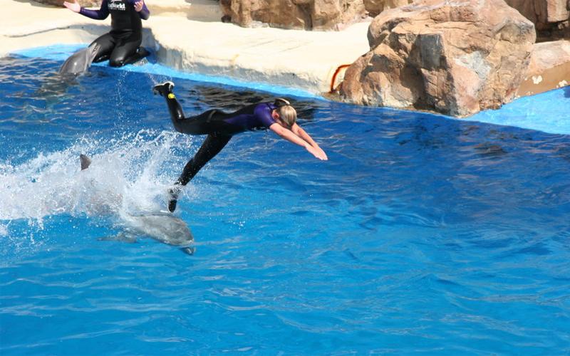 Бутылконосые дельфины Еще более интересны исследования, проведенные над бутылконосыми дельфинами. Эти млекопитающие продемонстрировали понимание не только отдельных слов, но и целых предложений — еще в 1984 году. Тренеры диктовали дельфинам фразы по четыре-пять слов. Те могли понять даже категорию времени: дельфин скидывал игрушку с тумбы ровно через 30 секунд после соответствующего приказа.