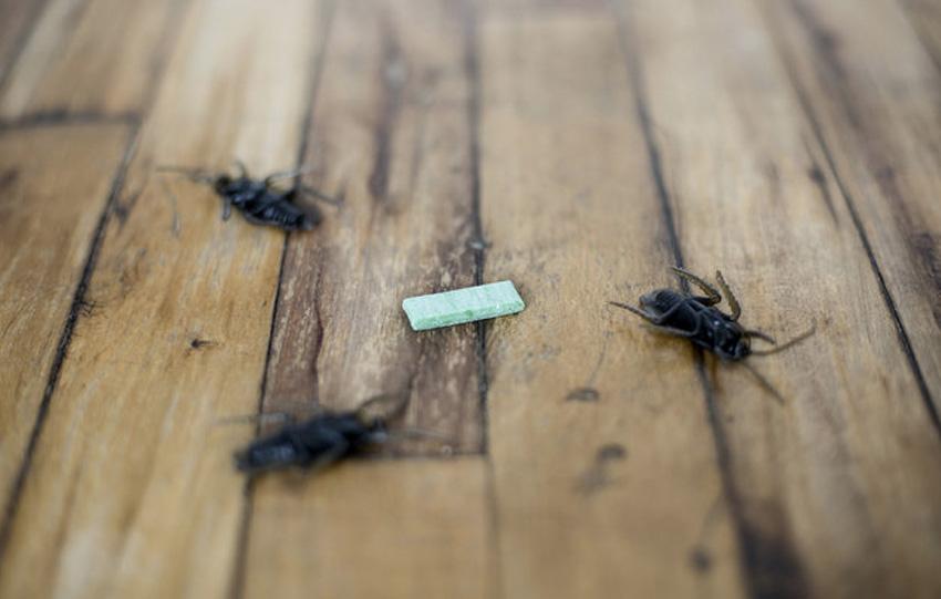 Репеллент Ментол, часто присутствующий в составе жевательной резинки, может не только освежить ваше дыхание, но и отпугнуть отдельных насекомых. Вещество является мощным природным репеллентом, запах которого не переносят некоторые виды жуков, тараканов и тутовый шелкопряд.