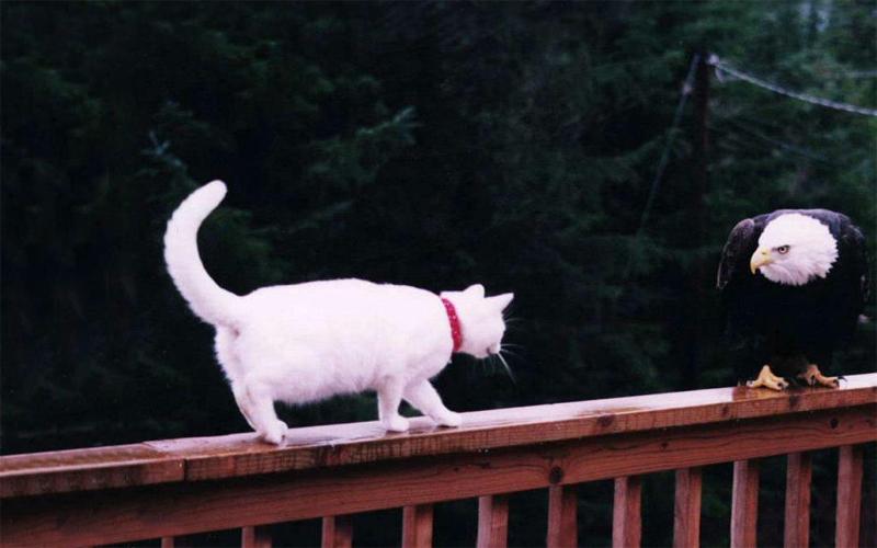 Домашние кошки Даже обычные кошки порой прекрасно понимают, о чем говорит с ними тренер. Также, эти животные отличают голос хозяина по тону и никогда не перепутают его с другим. В то же время, котам свойственно подавать сигналы полного пренебрежения словами человека. Обманываться не стоит: это, скорее, черта натуры животного.