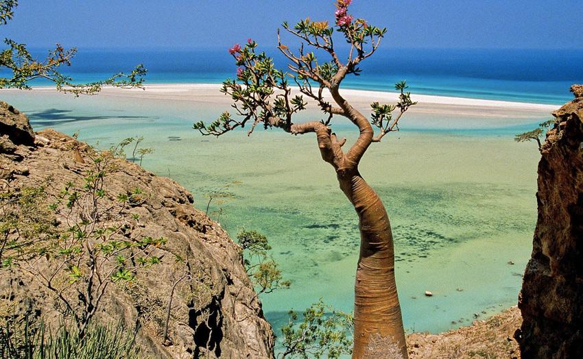 Растительный и животный мир Сокотры отличается высокой степенью эндемизма, то есть многие из существующих здесь видов не встречаются больше нигде в мире. Из 825 видов растений, произрастающих на острове, 37 % приходится на долю эндемичных.