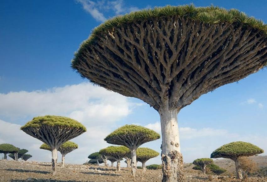 Сокотра, Йемен Это один самых изолированных в мире архипелагов континентального происхождения. Предположительно, он отделился от Африки примерно 6 млн. лет назад. Остров является домом для некоторых наиболее редких растений на планете, треть из которых не встречается больше нигде.