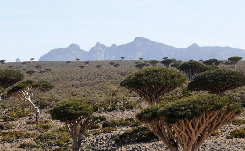 Самым большим из всех островов является Сокотра. Его площадь составляет 3625 кв.км. Остров простирается на 134 км. в длину и на 43 км. в ширину.