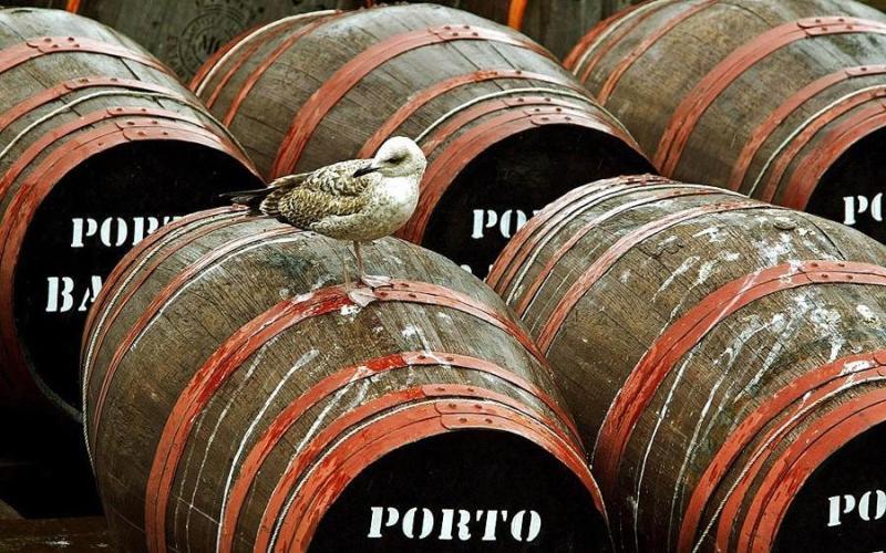 Вино чайки Кто сказал, что для приготовления вина необходим фрукты, ягоды или, на крайний случай, овощи? Инуиты —эскимосы родом из Канады, прекрасно обходятся и без них. Необходимо лишь отловить чайку и утопить в бочке с водой. Через несколько дней, в течение которых напиток настаивается на солнце, вино из чайки готово к употреблению. Тех, чей желудок справится с этим отвратительным на вкус и быстро опьяняющим пойлом, на утро ждет неприятный сюрприз: похмелье от него просто ужасное.