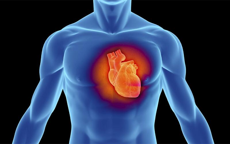 Расширение и утолщение Сердечная мышца может развиваться двумя путями. Первый — утолщение — D-тип гипертрофии. Именно он ведет ко всяческим неприятностям, типа микроинсультов. Второй — расширение — L-тип гипертрофии. Сердце при нем увеличивается в объеме. То есть, сократившись всего один раз, орган сможет перегнать через себя большее количество крови. Развивать, как вы и сами уже могли догадаться, нужно непременно L-тип. Так вы сможете выдерживать гораздо большие спортивные нагрузки. Не говоря уже о том, что проживете дольше.