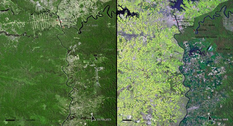 Вырубка деревьевАтлантического леса  Парагвай Слева:1973 год Справа:2008 год