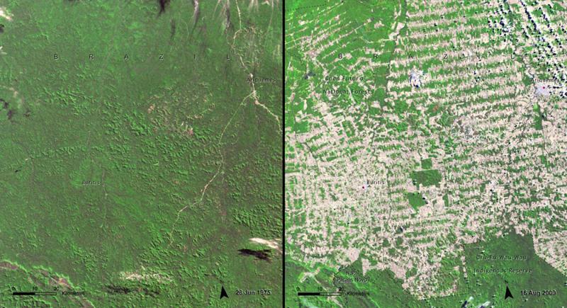 Вырубка лесов Рондония, Бразилия  Слева: 1975 год Справа: 2009 год
