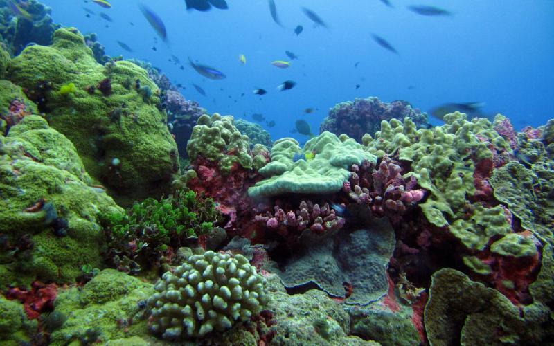 Заповедная территория островов Феникс Площадь: 408250 км²  Заповедник островов Феникс является самым крупным и самым глубоководным морским заповедником в Тихом океане. Он находится на территории республики Кирибати, расположенной на островах Микронезии и Полинезии. Ходят слухи, что первая женщина-авиатор, Амелия Эрхарт разбилась здесь на одном из островов во время своего кругосветного перелета в 1937 году.
