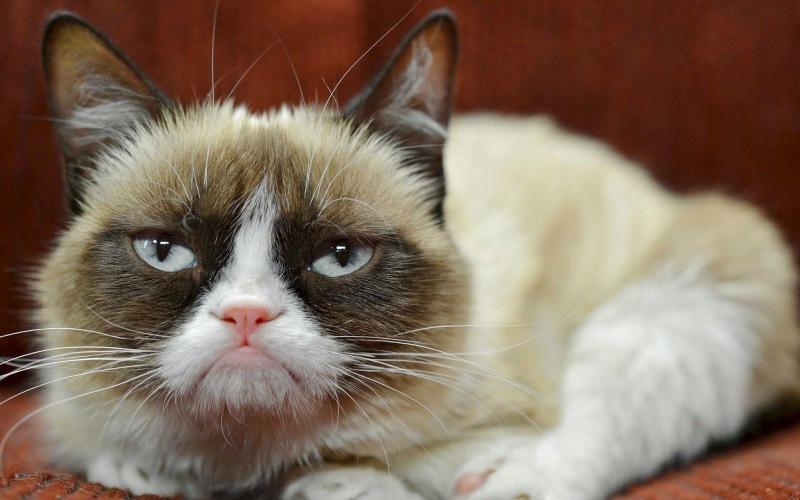 Кошачья мимика Наравне с собаками домашние кошки имеют очень выразительную мимику, обусловленную высокой подвижностью мимических мышц морды кошки. Понаблюдав за выражение «лица» своей кошки, вы заметите, что эти мышцы напряжены, когда она испытывает дискомфорт, и, наоборот, расслаблены, когда ваш питомец всем доволен. Настроение кошки довольно легко уловить, просто заглянув в ее большие глаза. Прикрыв веки, и изредка мигая, кошка сообщает, что ей абсолютно комфортно с вами. Широко раскрытые глаза выражают интерес к объекту внимания, а прищуренный взгляд в упор явно говорит о том, что кошка бросает вам вызов.