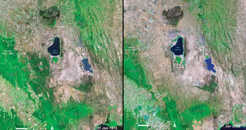 Вырубка лесов Национальный парк Накуру, Кения  Слева: 1973 год Справа:2000год