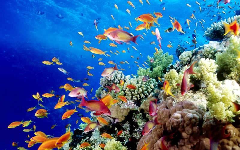Большой Барьерный риф национальный парк Площадь: 345400 км²  Национальный морской парк Большой Барьерный риф расположен у северо-восточного побережья Австралии, вКоралловом море. Он был создан для защиты от разрушения самого большого скопления кораллов в мире, находящегося именно здесь, и охраны экзотических морских видов животных.