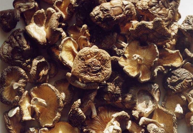 Грибы Содержание белка на 100 грамм: от 20 до 35 г.  Их не зря часто называют «лесным мясом». В сушеных грибах содержится до 30% белка, что в зависимости от вида колеблется от 20 до 35,5 г. на 100 грамм сухого продукта. К тому же грибы являются источником 18 аминокислот, 8 из которых незаменимы, т.е. не образуются в человеческом организме и поступают только с пищей. К сожалению, сами грибы плохо перевариваются и усваиваются организмом.