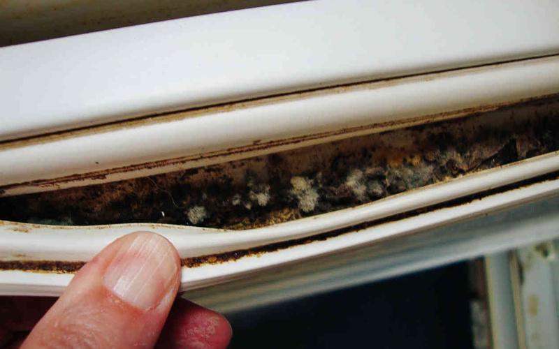 Уплотнитель в холодильнике Уровень угрозы: высокий Резиновые накладки на внутренней стороне двери холодильника — портал в настоящий ад. Здесь собрано все, что так любят грибки и микробы: темно, сыро, влажно, сюда часто попадают кусочки еды. Возьмите себя в руки и загляните в это мрачное место.