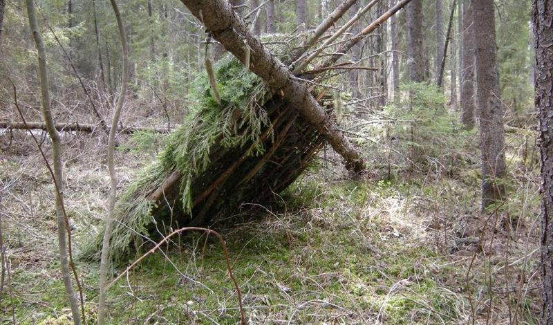 Укрытие Для начала, в лесу, стоит озаботиться об укрытии. Палатку, если она есть, нужно установить в первую очередь. Если нет — постройте укрытие сами. Лучше делать это с уже готовым основанием, подойдут крупные валуны, скалы или живые деревья, от которых уже можно делать навес и стены. В качестве покрытия пола можно взять листья, сухую траву и сосновые ветки, лежанка должна быть обязательно приподнята над землей.
