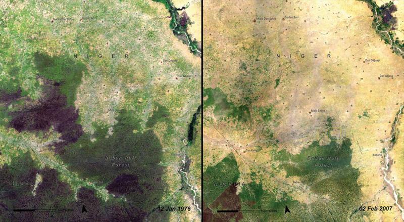 Вырубка лесов Бабан Рафи, Нигер  Слева: 1976 год  Справа:2007 год