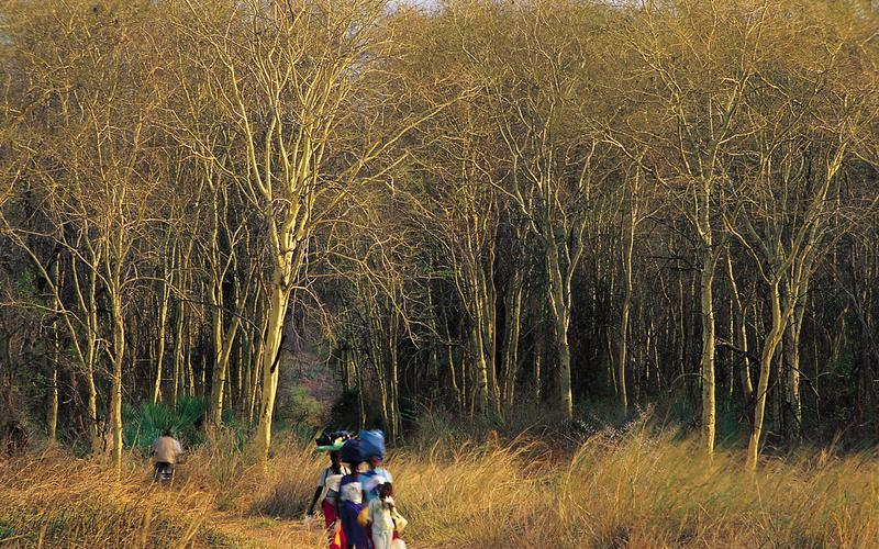 Трансграничный парк Лимпопо Площадь: 99800 км²  Этот заповедник охватывает территории в Мозамбике, Южной Африке и Зимбабве и состоит из 10 национальных парков и заповедников, включая национальный парк Банайн и национальный парк Крюгера. На землях парка обитают африканские слоны, жирафы, леопарды, гепарды, пятнистые гиены и множество других животных.