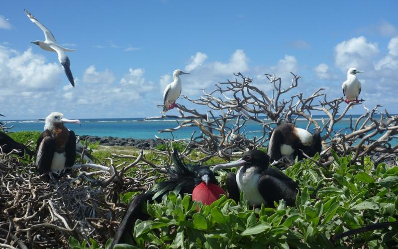 Национальный морской памятник Папаханаумокуакеа Площадь: 360000 км²  Заповедник с труднопроизносимым названием Папаханаумокуакеа расположен на территории Гавайского архипелага и объединяет десять атоллов и островков, входящих в его состав. Заповедник служит домом для 7000 различных видов, в том числе для находящихся под угрозой исчезновения гавайских тюленей-монахов.