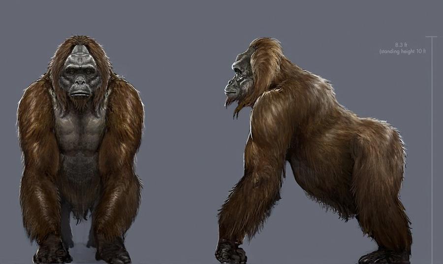 Гигантопитеки Это род человекообразных обезьян, который существовал в позднем миоцене, плиоцене и плейстоцене. Их останки были найдены на территории современных Индии, Китая и Вьетнама. Предположительно, их рост составлял от 3 до 4 метров и весили они до 550 кг. Основу их рациона составлял бамбук.