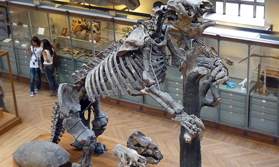 Мегатерий Вымерший род гигантских ленивцев жил в плиоцене и плейстоцене на территории Южной и частично Северной Америки от 2 млн. до 8000 лет назад. Вес животного мог достигать до 4 тонн. В высоту они почти вдвое были больше слона, а длина их составляла почти 6 метров. Передвигались они в основном на задних лапах. Строение их зубов говорит о том, что они были травоядными, однако у некоторых ученых есть основания полагать, что ленивцы не пренебрегали падалью и крупными животными.