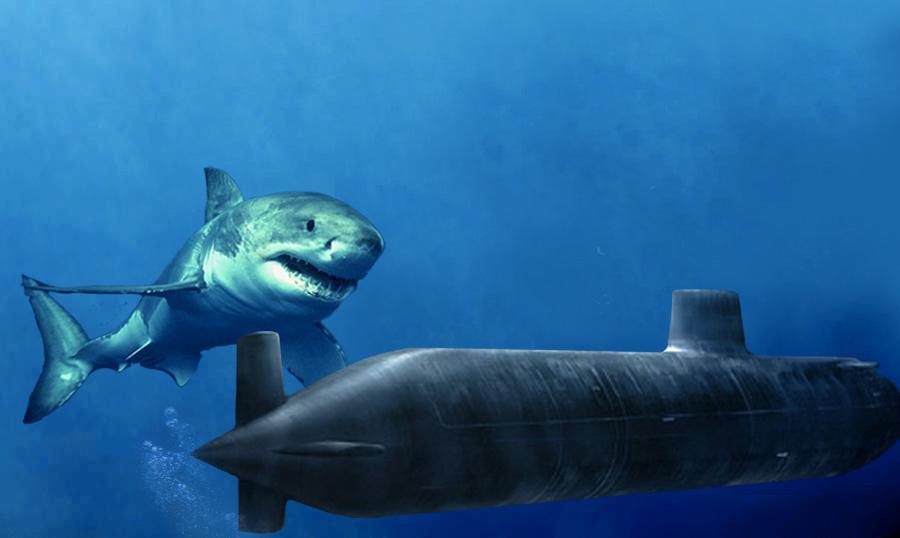 Мегалодон Даже 28 млн. лет назад, во времена позднего олигоцена до плейстоцена, одним из самых опасных хищников на планете была акула. Ее размеры составляли до 16 метров в длину, а весила она 47 тонн. Предполагается, что сила укуса достигала около 10,8 тонн. В отличие от других видов, мегалодон был распространен повсеместно. Основу его рациона составляли крупные рыбы и китообразные.