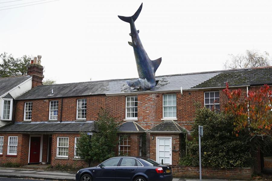 Акула Крыша дома, расположенного в Оксфорде, Англия, украшена десятиметровой скульптурой акулы, выполненной из фибергласса. Как ни странно, живет здесь вовсе не океанолог и даже не поклонник фильма «Шаркнадо». Акула появилась в честь очередной годовщины атомной бомбежки американцами Нагасаки.
