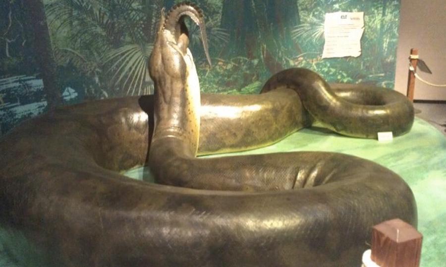 Титанобоа Близкий родственник удава, обитавший в районе Колумбии 58-60 млн. лет назад, весил более тонны и достигал 13 метров в длину. Жертву змея убивала своим телом, обвиваясь вокруг нее и затягивая плотно кольца.