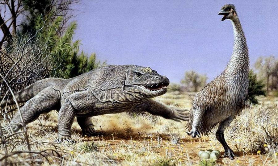 Мегалания Крупнейшая из всех известных науке наземных ящериц обитала на Земле в плейстоценовую эпоху, начиная с 1,6 млн назад и заканчивая примерно 40 000 лет назад. Вид был распространен на территории Австралии. Длина ящера составляла от 4,5 до 9 м, а вес достигал от 331 до 2200 кг. Ящерицы селились в разреженных лесах и травянистых саваннах и питались млекопитающими.