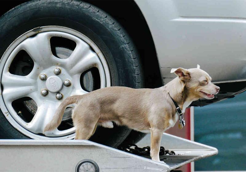 Нападение на собаку Полиция в Форт-Томас, Кентакки, взыскивает высокие штрафы с тех, кто решил заняться сексом в машине с… собакой. Мы советуем вам объезжать этот город стороной — уж больно странные люди там живут.