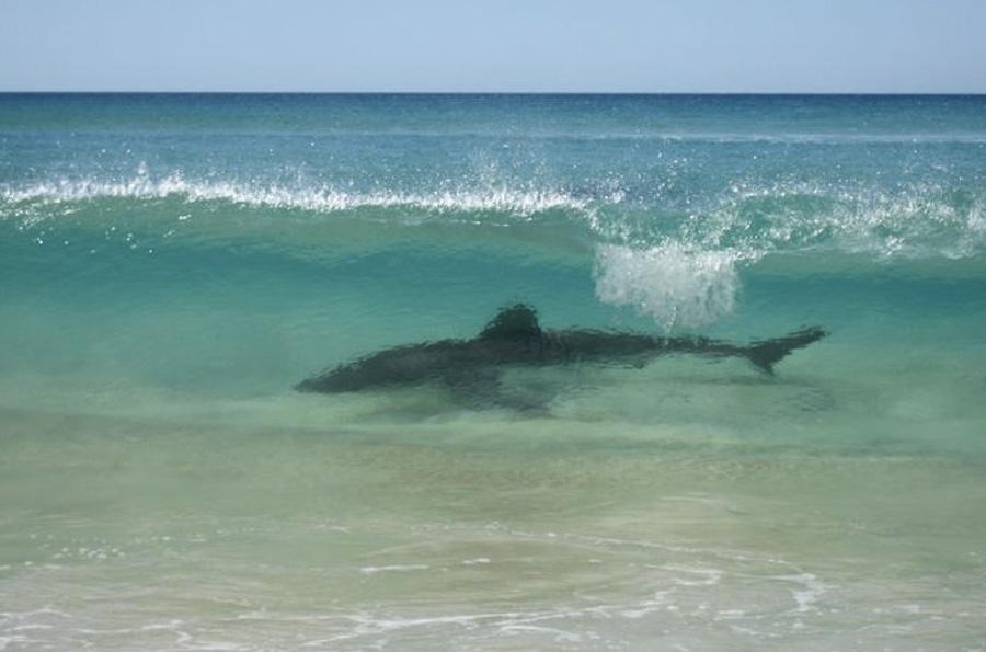 Остров Фрейзер, Австралия В 1992 году остров был включен в список Всемирного наследия ЮНЕСКО как неповторимый природный памятник. Между тем путешественников здесь поджидает масса опасностей как на суше, так и в воде. На острове обитают самые опасные в мире пауки и собаки динго, а водные процедуры с большой долей вероятности закончатся встречей с акулой или ядовитой медузой, или тем, что сильное течение унесет далеко от берега.